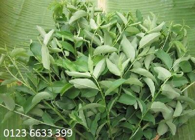Cách phá thai bằng rau ngót, rau má, rau răm, đu đủ xanhCách phá thai bằng rau ngót, rau má, rau răm, đu đủ xanh